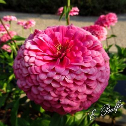 flowers7