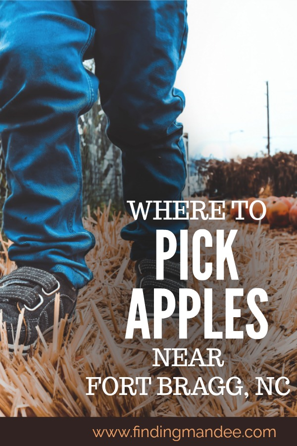 Pick your own apple orchards near Fort Bragg, NC