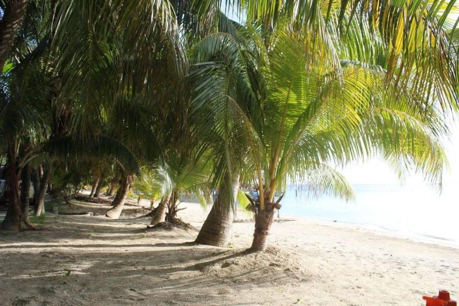 things to do in Roatan Honduras take pictures