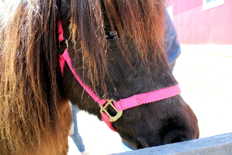 pony ride at the Equestrian Center at Shenandoah Crossing