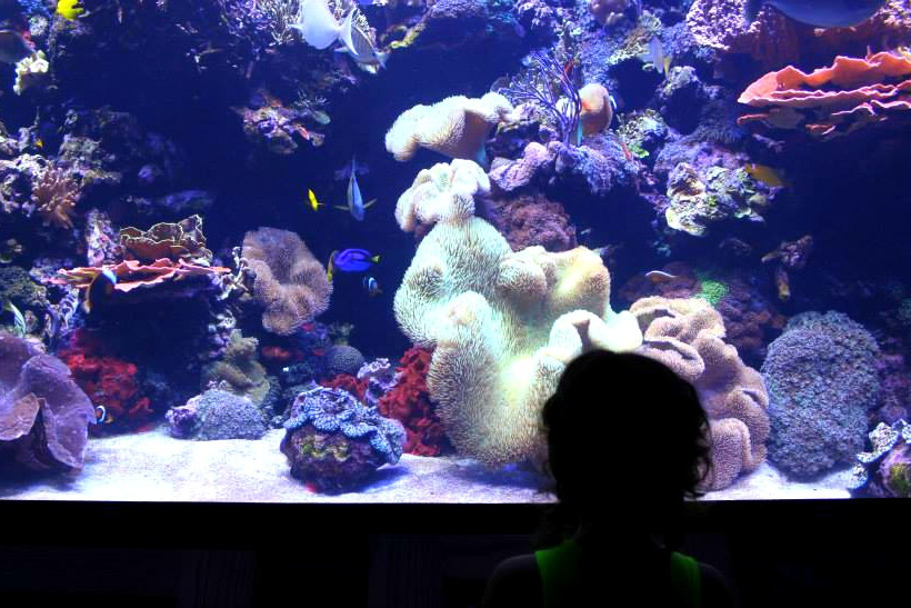 Houston CityPASS DownTown Aquarium