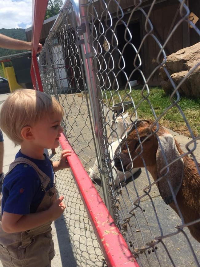 little boy looking at goat through the fence in Pigeon Forge Tennessee
