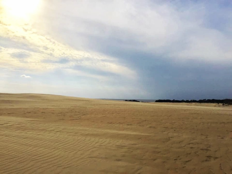 Jockey's Ridge State Park is home to the tallest sand dunes on the East Coast!