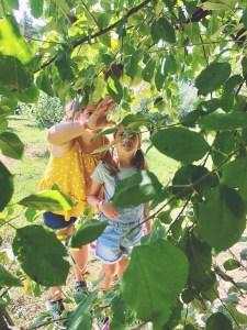 Apple pickin' near Fort Bragg at Millstone Creek Orchards.