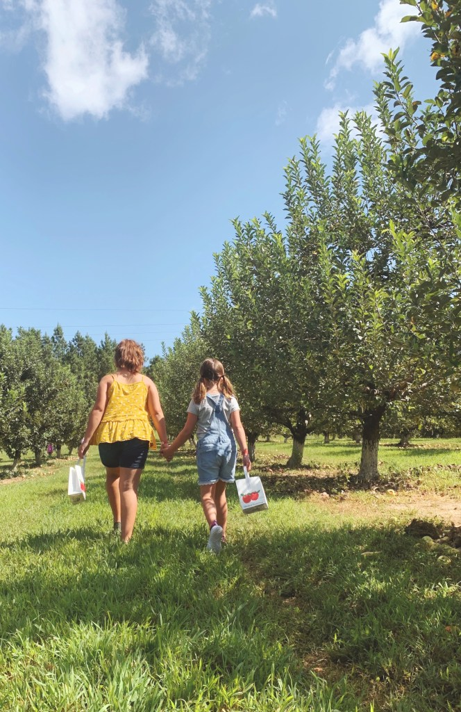 Picking apples at Millstone Creek Orchards near Fort Bragg, NC.