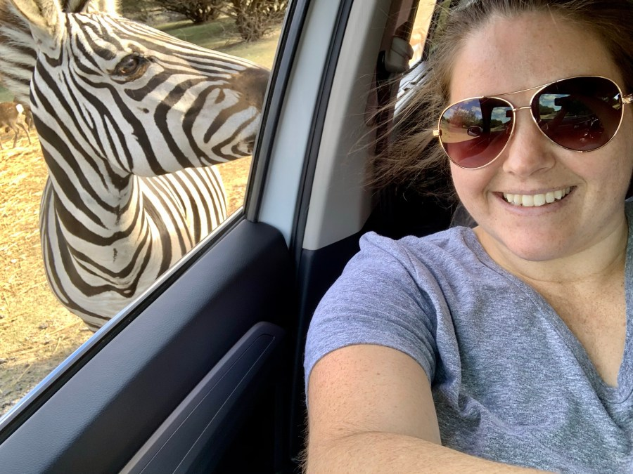 Feeding and petting the zebras at Topsey Exotic Ranch.