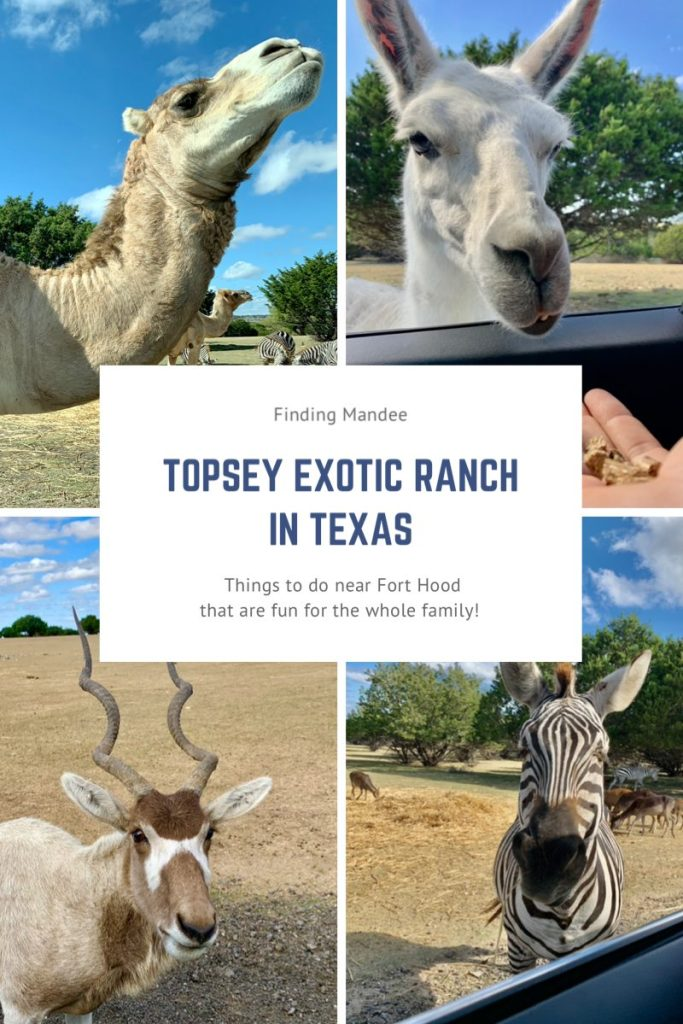 Topsey Exotic Ranch: Things to do at Fort Hood, TX | Finding Mandee