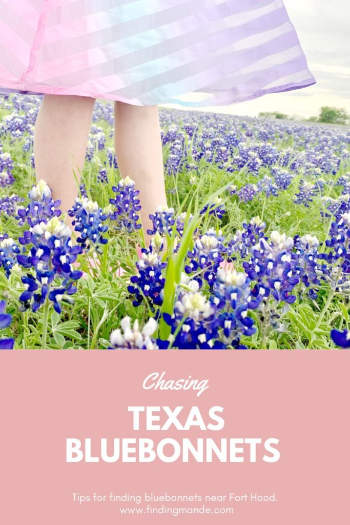 Chasing Texas Bluebonnets   Finding Mandee