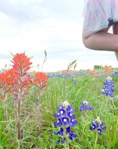 Bluebonnets and Indian Paintbrush near the road in Temple, Texas