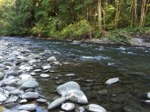 Best place to spot migrating salmon, so I was told