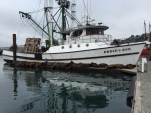 Hanging out on a commercial fishing dock