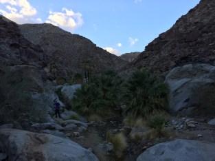 Heading into Palm Canyon