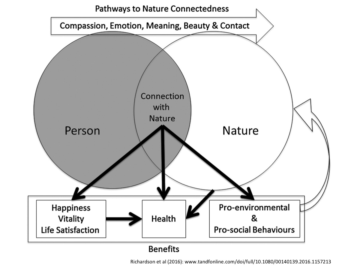 Nature A New Paradigm For Workplace Wellbeing Finding Nature