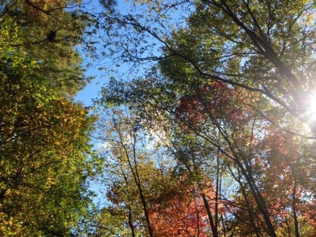 fall foliage2