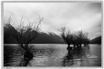 World Famous Trees in Glenorchy