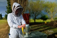 Bee Man (4)