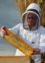 Bee Man (2)