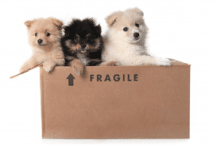 Pet Movers