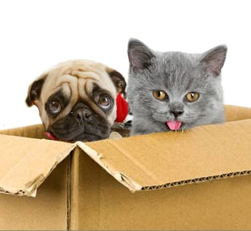 Relocating Dogs and Cats