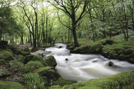 The Nature Trail at Hoburne Doublebois - Hoburne Doublebois Holiday Park