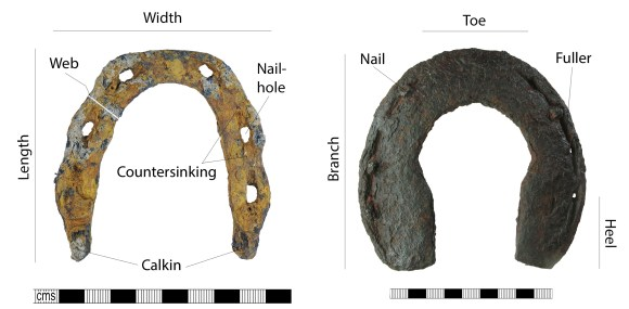 Horseshoe terminology: ground surface shown. Images - left, medieval horseshoe (BH-AAFF1B); right, post-medieval horseshoe (HAMP-D34F92). Copyrights: The Portable Antiquities Scheme; Winchester Museums Service; CC-BY-SA licence)