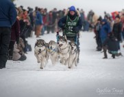 Apostle Islands Dog Sled Races 2015-7445-1