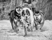 """Jim Lynch, Bayfield, WI - Racey's Rescues"""""""