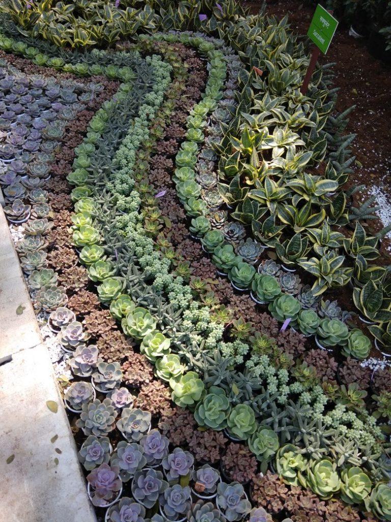 empress garden flowers beds 2018