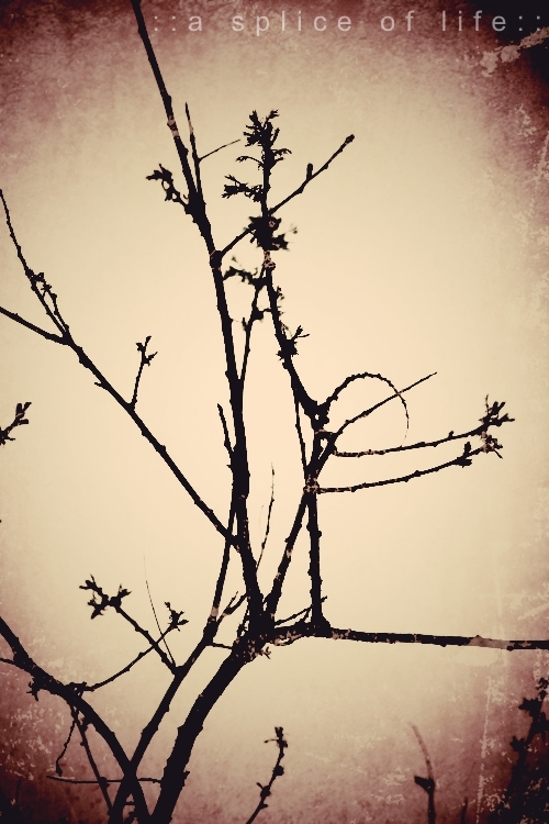 branches3.2