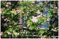 blooms2016.3
