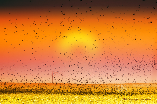 Bird Land Colorful Sunset Fine Art Photography Print