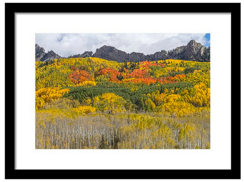 Colorado Kebler Pass Fall Foliage Framed Print