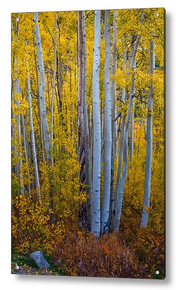 Golden Forest Portrait Acrylic Print