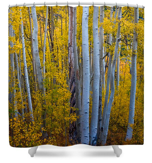 Golden Forest Portrait Shower Curtain