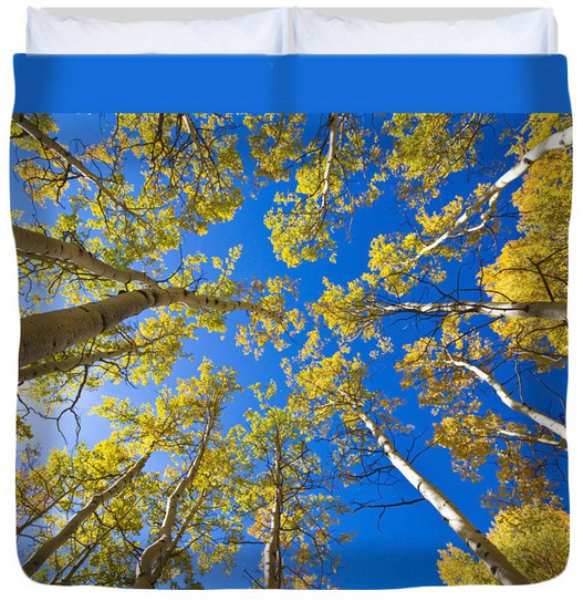 "Golden View Looking Up King (104"" x 88"") Duvet Cove"