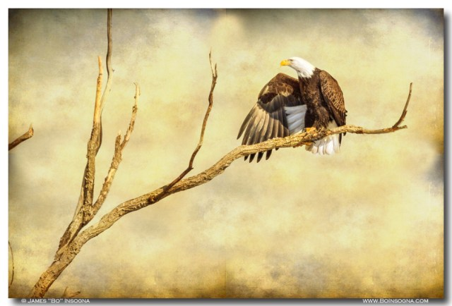 Majestic Eagle Point