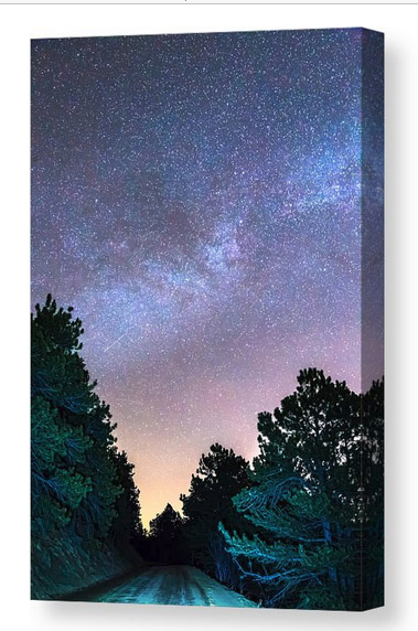 Forest Night Light Canvas Print