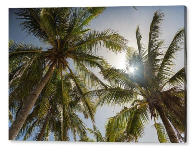 Tropical Sun Canvas Print
