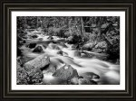 Cascading Rocky Mountain Forest Creek Bw