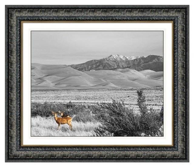 Great Colorado Sand Dunes Deer Framed Print