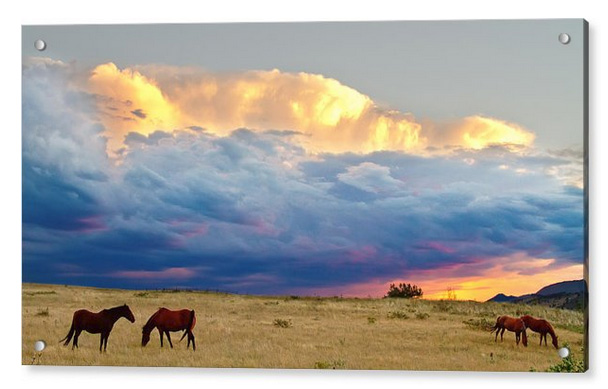 Horses On The Storm Panorama Acrylic Print