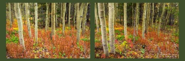 Forest Enchantment Rembrandt Style Diptych Art