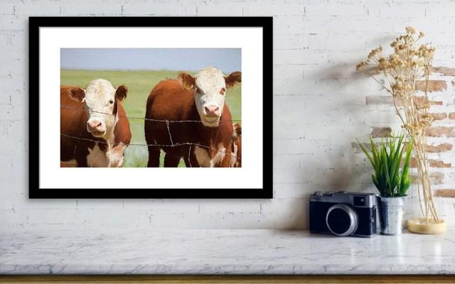 Two Cows Digital Art Framed Print