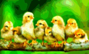 Animal Art Baby Chickens