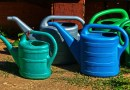 Watering Cans Spray Jug Vessel  - anaterate / Pixabay