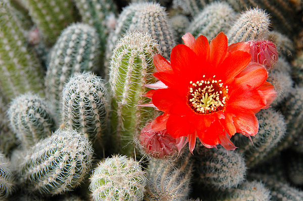 Cactus with orange flower