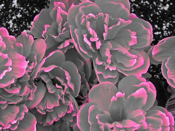 beautyful flowers gray flowers
