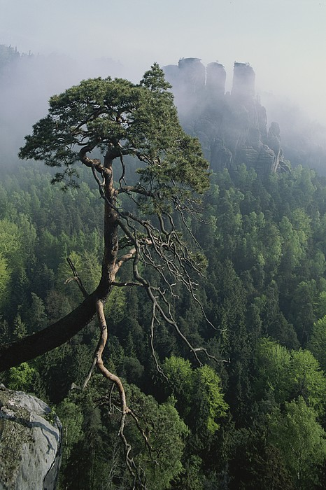 Scenic View Of A Gnarled Tree Photograph by Norbert Rosing