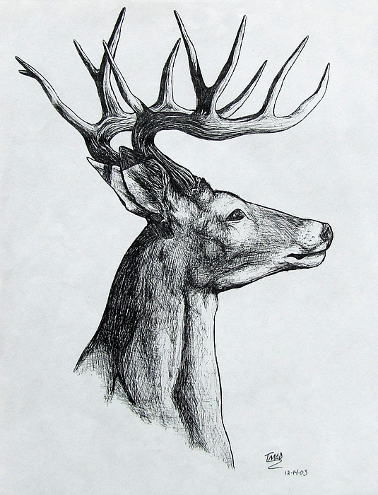 Deer Drawing by Michael TMAD Finney