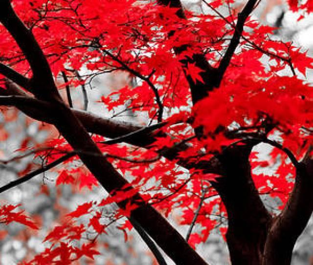 Last Fall Colors By Alex Rios
